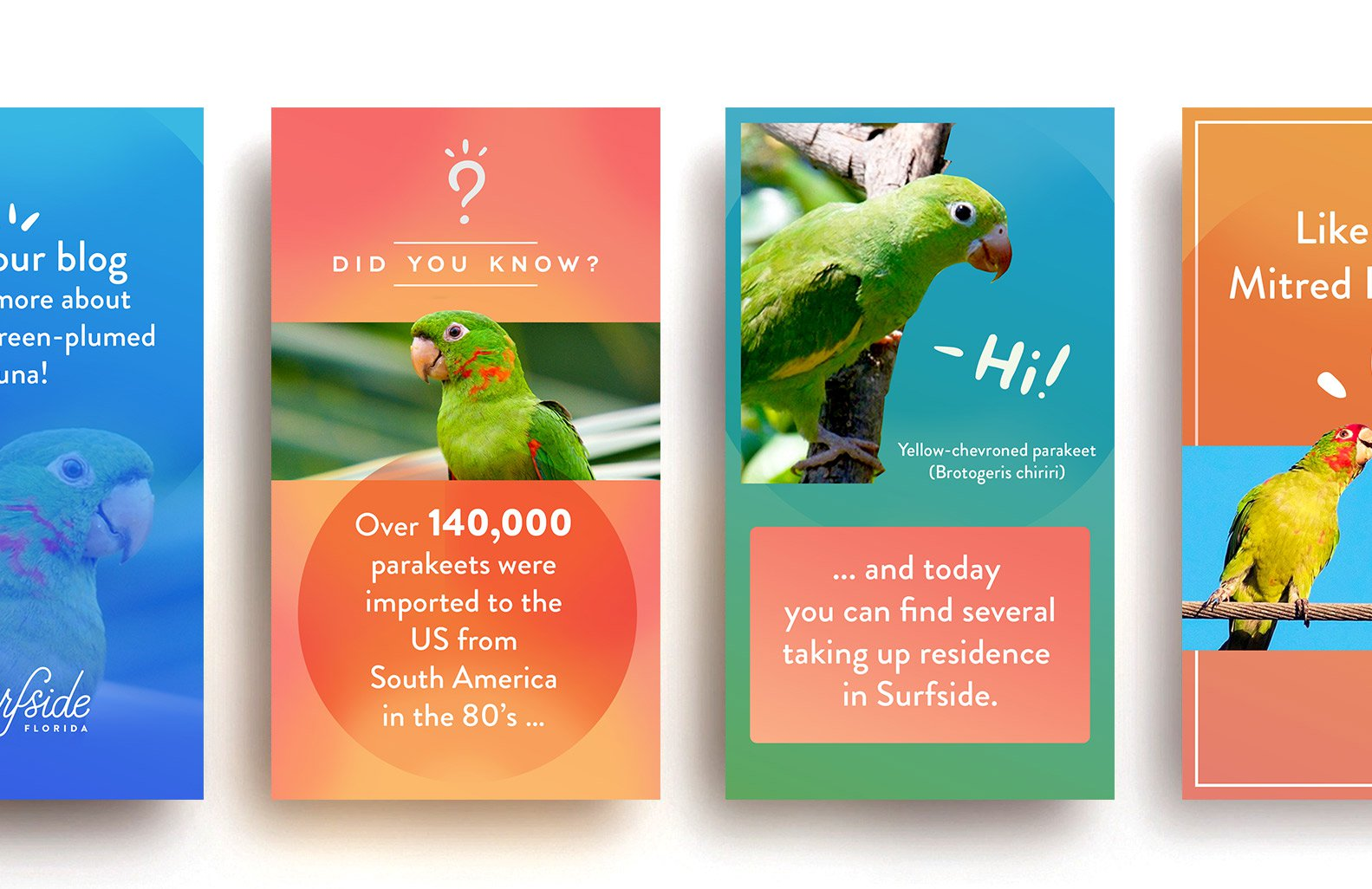 Jacober Creative Identity and Campaign for the Town of Surfside Florida - Photo Social Media stories design featuring Surfside birds